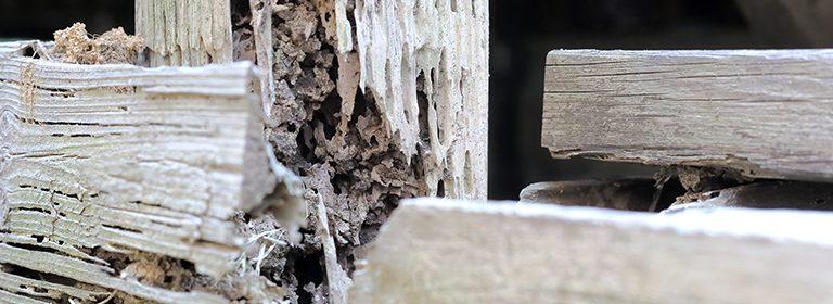 奈良の一戸建てのシロアリ保証